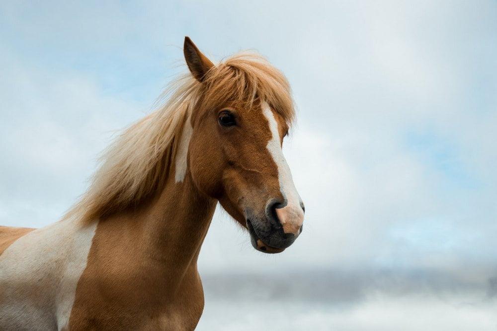 GUIDE: Vælg det rigtige hovedtøj til din hest